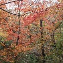 花貫渓谷 紅葉まつり