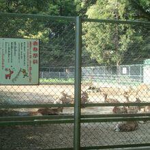 鹿島神宮の鹿には近寄れませんでした
