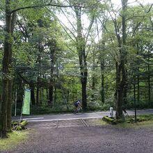 朝の別荘地の緑が気持ちいいです