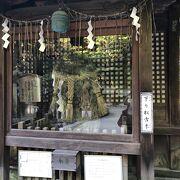 一乗寺下り松古木があります
