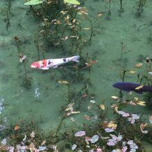 不思議な池