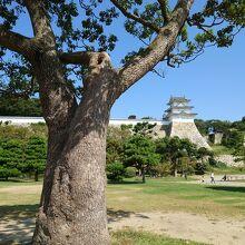 兵庫県立明石公園に行きました。