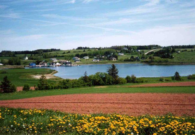 """ついに憧れのプリンスエドワード島に行ってきました!6月の「赤毛のアン」の島は、私の出会いたかった花々であふれていました。""""歓喜の白路""""の舞台となったりんご園、つやつや輝くバターカップ、白いクラッカーベリーの花畑、名も分からない野の花まで、しっかりとこの目と写真に焼き付けてきました。初の一人旅ということで、ハプニングあり、ホームシックありの、ちょっぴり大変な旅でしたが、この島で得た感動と出会いは、私の一生忘れられない想い出になりました。"""