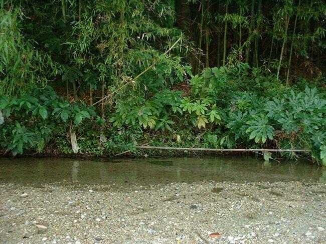 天の川は七夕伝説!地名も七夕に関わるものがある。川は砂地できれいな水。椅子を持ち込んで足を川に浸して本を読むことも出来ます。まるで避暑地(^_^)v堰堤の深みで泳ぎもできるがやや危険。<br />