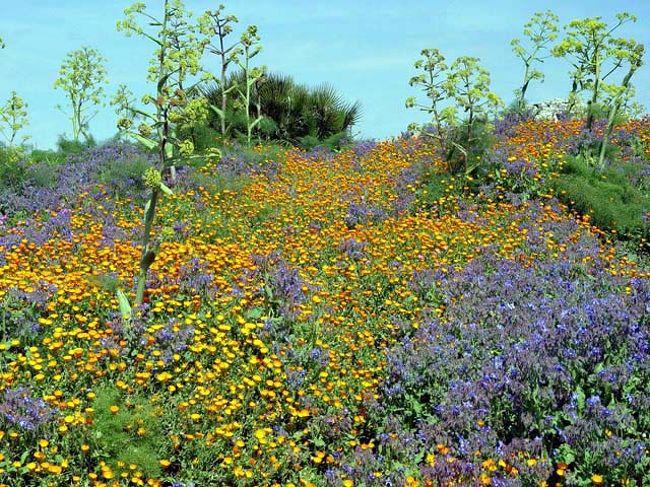 4/初旬!時期的には少し寒いかなと思ったが最初に着いたシチリア島の州都パレルモは思ったより暖かく、黄色や赤や紫色の可愛い春の花が美しく咲き、オレンジやレモンが沢山実っていた。やはり春の旅は気持ちがよい!<br />シチリアはイタリアとはいえ過去の異文化の移入によりイスラムの風情を漂わせている。歴史も古く世界遺産に登録された所が多い。<br />南イタリアは北イタリアとはまた違った雰囲気を持っており、<br />ナポリやカプリ島、アマルフィの海岸線などの美しさは素晴らしい。南、北イタリアとシチリア島とそれぞれ3回に分けてゆっくりのんびりと旅が出来れば素晴らしいだろう・・と思った。<br />今回は秘境ではなく身近で見られる自然の美しさと遺跡を併せて<br />見ることができ満足な旅であった。期待通りの素晴らしい所だった・・!行って見ないとこの感動は得られないだろう・・やはり旅は楽しい! <br /><br />詳細は<br />http://yoshiokan.5.pro.tok2.com/<br />旅いつまでも・・★画像旅行記<br /><br />http://yoshiokan.5.pro.tok2.com/sici/nori144sici.html<br />チリア島と南イタリアの旅を<br /><br />ご覧ください<br /><br />