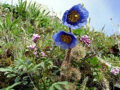 中国・四川省の花を巡りて・・旅いつまでも
