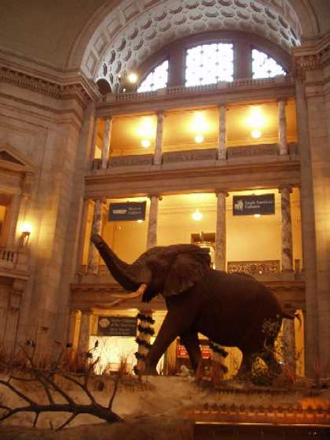 ここの見所は、持ち主に数奇な運命をもたらした「ホープ・ダイヤ」を初めとする宝石コレクションと、まるで生きているときの風景をそのまま切り取ってきたかのような、哺乳類の展示コーナーです。<br />写真は、中央ロタンダのアフリカ象