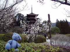 2005年瑠璃光寺五重塔ガイド日記