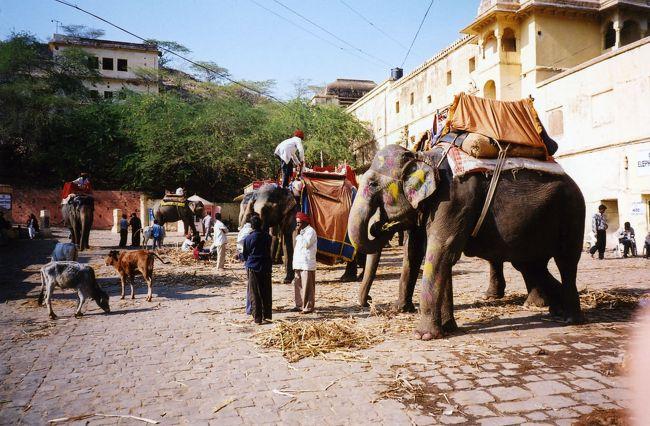 象のタクシーで有名なアンベール城に行きました。象に乗って城まで坂道を登っていきます。<br />象に乗ってから当たり外れがわかります。私の乗った象ははずれでした。とにかく、縦揺れが激しく、落ちない様にしていました。他の象に乗っている人を見ても、揺れていません。残念!<br />象には、象使いの人以外に右側に二人/左側に二人が座りました。