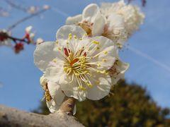 東福寺から伏見稲荷のお散歩(*^。^*)