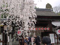 魁桜を見る(*^^)ノ@平野神社☆2005年4月3日