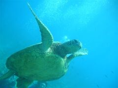 Hawaii 9泊11日<オアフ編①>(2005年5月2日~)