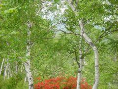 八千穂高原の可憐な花