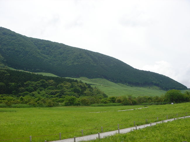 ニッコウキスゲが咲いたとの情報で<br />箱根湿性花園まで出掛けました<br /><br />御殿場から乙女峠を越えて箱根町へ<br />富士山は歌の通り【頭を雲の上に出し】<br />雲がだんだん上がってきてこれ以後は姿をすっかり隠してしまいました<br /><br />今日の箱根は蒸し暑くて少し歩いただけで汗が出る。。<br />緑が多いので風が吹けば涼しいのですが・・暑かった<br />湿性花園のニッコウキスゲはもう少しですね<br />珍しいところでは、ヒマラヤの青いケシとヘイシソウ<br />クロハナロウゲが咲いていました<br /><br />散策してランチは入り口にあるレストラン<br />私はビーフストロガノフ<br />美味しかった!!自家製パンも美味しかった!!<br />コーヒーは箱根富士屋ホテルでということになり<br />ここでは我慢<br /><br />富士屋ホテルは国登録有形文化財<br />明治11年に建てられたものでまるで神社仏閣のよう<br />その風格には圧倒されました<br />今日はデザートだけにして<br />次はダイニングで食事をしましょう!!<br /><br />帰りは三島市に下りて<br />富士山の伏流水「柿田川」で涼んでいたら<br />トンボ・チョウが飛んでいて昆虫好きの私は涼む・・ところではなかったでした