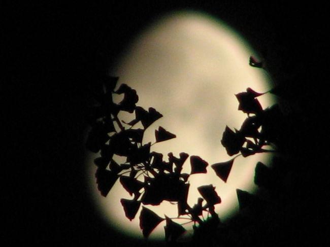 月の輝きを求めて