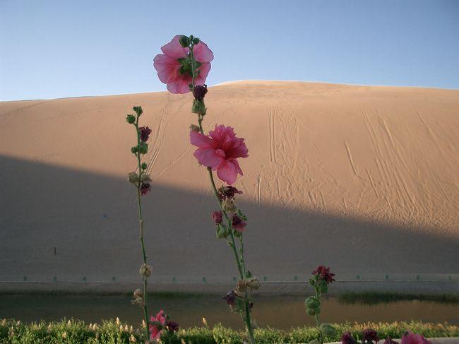 2日目の旅行記(その3)です。<br /><br /><br />莫高窟(モーガオクー/Mogao Caves)から敦煌(ドゥンファン/Dunhuang)市内へ帰り、一休みした後で夕暮れの鳴沙山(ミンシャシャン/MingShaShan)へ向かいました。<br /><br />本当はもう少し遅い時間に行って、「月の砂漠」を見たかったのですが、21時を過ぎても陽が沈まないこの辺りなので難しかったです。<br /><br /><br />■中国・シルクロード周遊<br />■8/1/2005〜8/10/2005<br /><br />■1日目:中国東方航空で上海へ。国内線に乗り換え蘭州経由敦煌まで。<br />MU762 鹿児島13:30→上海浦東14:00(-1h)<br />MU2352 上海虹橋19:05→敦煌23:55(-1h)<br /><Part1:中国入国・国内移動編><br />http://4travel.jp/traveler/jyshp/album/10031297/<br /><br />■2日目:敦煌市内観光、莫高窟、鳴沙山<br /><Part2:敦煌・市内散策編><br />http://4travel.jp/traveler/jyshp/album/10031310/<br /><Part3:世界遺産・莫高窟編><br />http://4travel.jp/traveler/jyshp/album/10031332/<br /><Part4:月の沙漠・鳴沙山編><br />http://4travel.jp/traveler/jyshp/album/10031340/<br /><br />■3日目:長城、玉門関、陽関、敦煌古城を観光後、寝台列車で吐魯番へ<br /><Part5:敦煌・定番観光編><br />http://4travel.jp/traveler/jyshp/album/10031476/<br /><Part6:敦煌故城・鉄道移動編><br />http://4travel.jp/traveler/jyshp/album/10031506/<br /><br />■4日目:アイディン湖、蘇公塔、カレーズ民俗園、交河故城<br /><Part7:世界で2番目に低い湖・アイディン湖編><br />http://4travel.jp/traveler/jyshp/album/10031667/<br /><PART8:吐魯番・定番観光編><br />http://4travel.jp/traveler/jyshp/album/10031788/<br /><br />■5日目:火焔山、高昌故城、アスターナ古墳群、ベゼクリク千仏洞、タクラマカン砂漠、ウイグル民家訪問<br /><Part9:吐魯番・周辺観光編><br />http://4travel.jp/traveler/jyshp/album/10031892/<br /><Part10:世界で2番目に大きい砂漠・タクラマカン砂漠編><br />http://4travel.jp/traveler/jyshp/album/10031968/<br /><br />■6日目:吐魯番景区観光後、車で烏魯木斉へ。天池観光、市内観光<br /><Part11:吐魯番景区編><br />http://4travel.jp/traveler/jyshp/album/10032072/<br /><Part12:中国のスイス・天池&烏魯木斉編><br />http://4travel.jp/traveler/jyshp/album/10032178/<br /><br />■7日目:烏魯木斉市内観光<br /><Part13:烏魯木斉・市内編><br />http://4travel.jp/traveler/jyshp/album/10032266/<br /><Part14:烏魯木斉・バザール編><br />http://4travel.jp/traveler/jyshp/album/10032363/<br /><Part15:烏魯木斉・夕景編><br />http://4travel.jp/traveler/jyshp/album/10032462/<br /><br />■8日目:中国東方航空の国内線で烏魯木斉から上海へ、到着後観光。<br />MU5632 烏魯木斉13:55→上海虹橋18:20(+1h)<br /><Part16:烏魯木斉・上海移動編><br />http://4travel.jp/traveler/jyshp/album/10032592/<br /><Part17:上海・夜景編><br />http://4trave