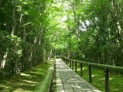 大徳寺の竹林は緑でうまっていました