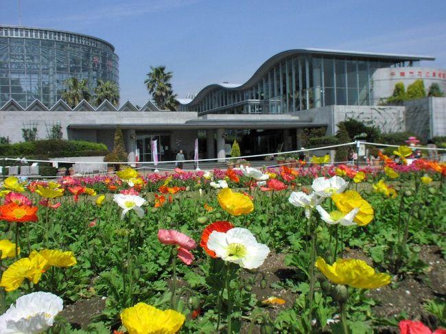 """こんにちは! いつもこの「花の美術館へ」に来場いただき誠にありがとうございます。<br /><br /> 今回はいつもの美術館から離れまして 季節の花 """"バラ """"探訪に行ってきましたので オンパレード で展示いたします。<br /><br /> もし、お気に入りで良かったとお感じになられましたら、一番最後の人気投票に スイッチ ポン をお願いします。<br /><br /><br /> 花の姿を探し、その麗しい所を認め、花をめでる気持ちをもつことは自分の命が潤っていることの証です。<br /><br /> どうぞ、花達の懸命な装いを見てやって下さい。<br /><br /> 花の美術館  JR 総武線稲毛駅 京成線稲毛 美浜海浜公園"""