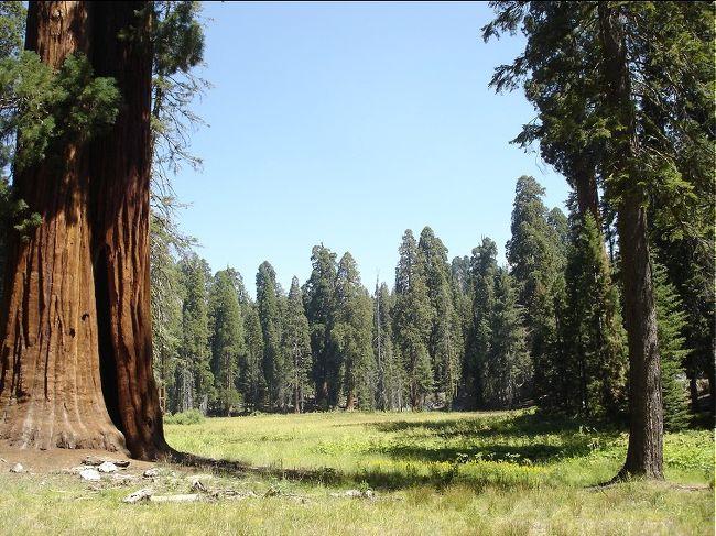 今回は地球上で最も大きな生物と言われるセコイアの群生地、セコイア国立公園とキングスキャニオン国立公園を特集いたします。特集にご協力いただいた柳さんと窪田さんはとにかくビックな物が大好きと言うお二人。このお二人を交えてセコイアの森をご案内いたします。セコイア国立公園はロサンゼルスから車で約4時間ぐらいの所に位置し、日帰りも可能な国立公園ですが、今回はキングスキャニオン国立公園も行きますので1泊2日の旅となりました。両国立公園はアメリカ西部のシェラネバダ山脈の山中に隣接し、山あり谷あり滝あり川あり湖ありの自然を満喫するにはもってこいの場所と言える。セコイアの森を森林浴を楽しみながら自然の中にどっぷりと浸かってみました。その様子をどうぞご覧下さい。