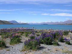 ニュージーランドドライブ(1) クライストチャーチからテカポ編 2003年11月
