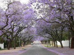 南アフリカの旅(1)・・7万本の満開のジャカランダを訪ねて