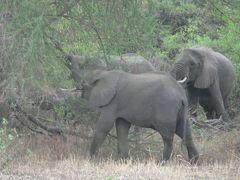 タンザニアの旅(2)・・人類発祥の地オルドバイ渓谷とマニヤラ湖を訪ねて