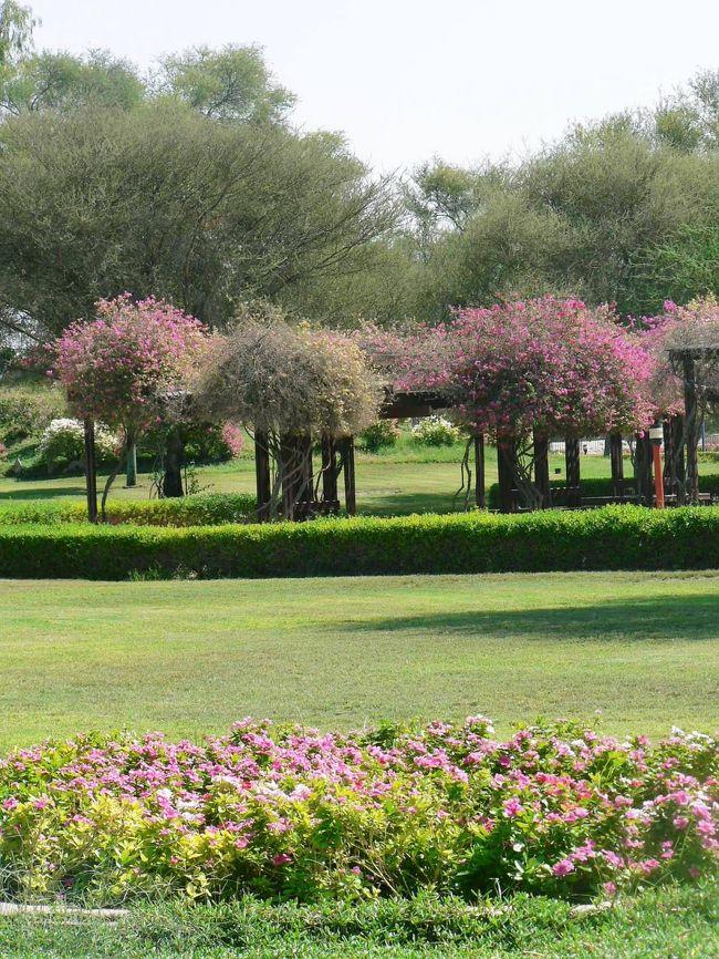 アブダビ首長国の第2の都市アル・アインはオマーンと国境を接し、オアシスとして栄えてきた。アル・アインには、紀元前3000年以上前から人類が住んでいた遺跡が発見されている歴史がある街だ。また、アル・アインの街には自由に入出国ができるオマーン領・ブライミ(Buraimi)という街がある。石油採掘を巡ってサウジアラビア、オマーン、UAEが長年紛争した結果UAEの街中にオマーン領ができてしまったそうだ。<br />アルアインではオアシス都市の歴史を展示したアルアイン博物館、ラクダ市、紀元前3000年の墓地遺跡があるヒリガーデンズを見学したが、遺跡より良く手入れされた園内の花々が目を引いた。<br />(写真はヒリガーデンズの光景)<br />