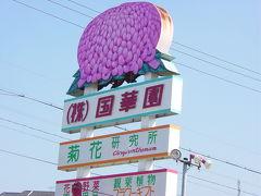 第22回日本菊花全国大会。