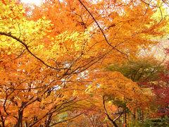 京都('05 紅葉狩り)