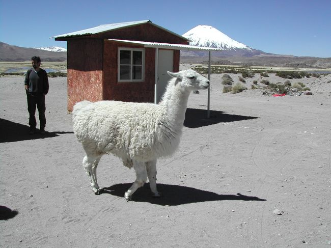チリは南北に長い国で,気候も変化に富み,一度で夏から冬まで堪能できる「美味しい国」です.でも短期間で全てを回るのはほとんど不可能.できれば数ヶ月かけてじっくりと旅行したいものです.