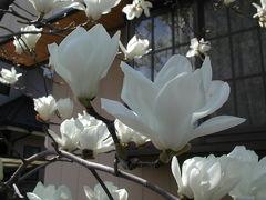 野の花・庭の花に誘われて  その1