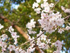 お花見●宴たけなわ●富岡総合公園
