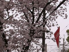 脅威の黄砂に桜も迷惑!?