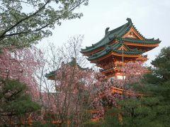 南禅寺前から平安神宮へ桜をめでに