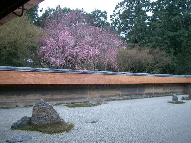 龍安寺には何度もきていますが、どういうわけか枝垂桜の季節にはきていませんでした。写真で見た枝垂桜の実物を見に、龍安寺をたずねました。やはりいいですね。ここはいつの季節にきてもさまざまに違っていて、新たな発見があります。昔のひとはえらかったですね。庭園でも桜が満開でした。