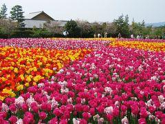 ★なばなの里 「チューリップまつり」 Nabana village 「 Tulip festival  」