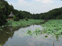 成田市散策(1)・・坂田が池を訪ねて