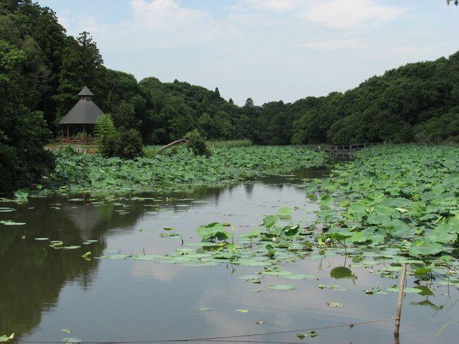 成田市散策(1)・・坂田が池を訪ねます。