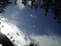 鰯雲が輝くとある日~硅化木紹介~