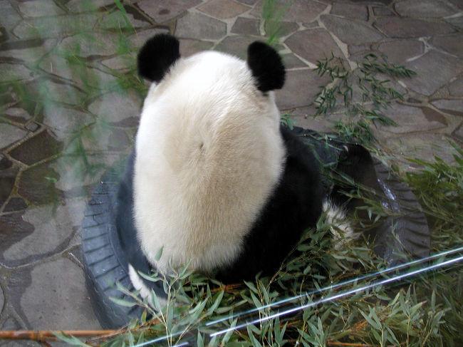 今日は、イラストレーターJ小姐の知っているお店へ色々見に行く為に、神戸の王子動物園前までやって来ました。<br />さてさて。<br />爺ぃ、日本で見るパンダは如何なものかな?(^^