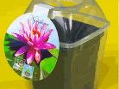 水生植物園のおみやげ 睡蓮の観察日記
