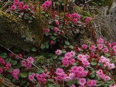 箱根の山、神山を歩く。
