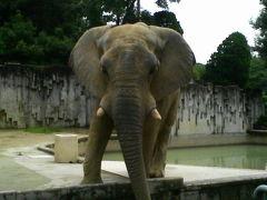東山動植物園へ、、、子供の頃を思い出しつつ。