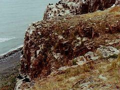 ★ちょっと昔の中国 青海省、甘粛省、寧夏回族自治区一人旅(2) 青海湖へ