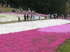 羊山公園の芝桜 と 越生 やまぶきの里