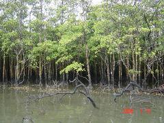 西表島のマングローブの林