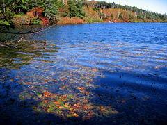 白駒池は空のブルーを映しこんで