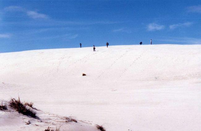 アデレードから1泊2日のカンガルー島ツアーに出かけました。<br /><br />自然も野生動物もいっぱいの島でした。<br />貴重な野生動物も、あまりにたくさんいて、「すごい」を通り越して、あまり感動しなかったりして(^^;).<br /><br />この時の最高気温17℃!寒いよぉ〜。<br /><br />