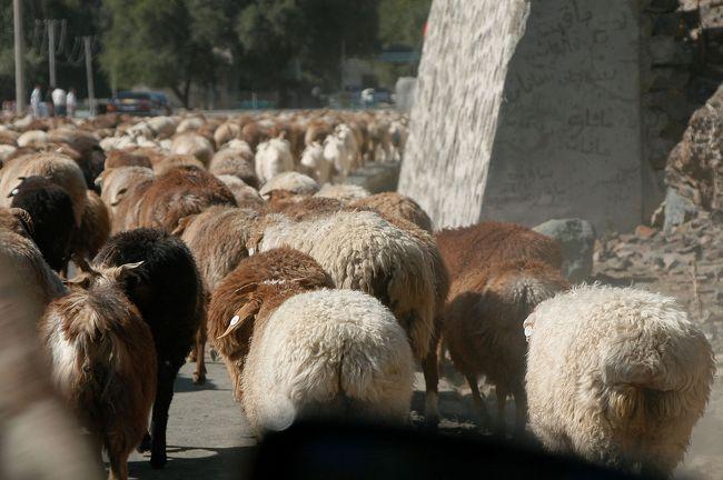 8月29日。<br />29日のラスト第3部は、天池からの帰りのエピソードを。<br /><br />天池を離れた我々は、またもや大群の羊君達に遭遇。<br />車は行く手を塞がれて、あわや・・・・な~んて事は全然無く、無事にやり過ごして麓の町「阜康」へ。<br />そこへ野暮用で立ち寄り、ついでに町の様子もちらほらと。。。<br /><br />帰りの道中、遠くに見えるボゴタや天山山脈の万年雪が見送ってくれた。