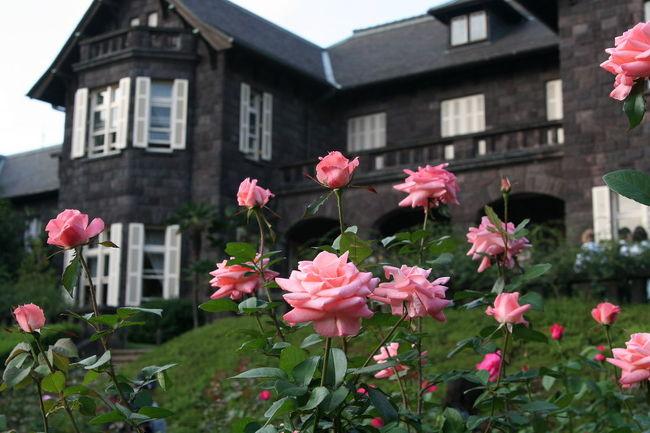 10/14(土)に行ってきました、旧古河庭園の「秋のバラフェスティバル」。おしゃれな洋館と華やかなバラはとっても良い取り合わせだと思いました。 それほど広くないバラ園は多くのカメラマンやバラ愛好家(?)でにぎわっていました。 <br /><br /><br />内容は妻のブログ「さにこのばら園 〜Rosarium〜」からです。 → http://sanirose.blog60.fc2.com/<br /><br />薔薇の写真はこちら → http://www.photolibrary.jp/profile/artist_88_9.html<br /><br />
